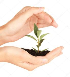 depositphotos_14954403-stock-photo-womans-hands-holding-a-plant